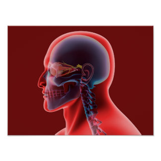 Imagen conceptual del ojo humano y del cráneo póster
