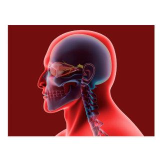 Imagen conceptual del ojo humano y del cráneo tarjetas postales
