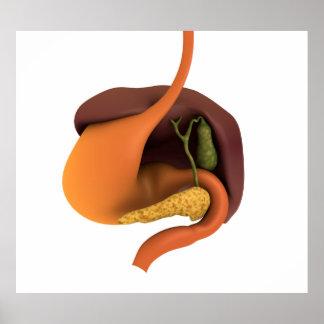 Imagen conceptual del sistema digestivo humano 4 posters