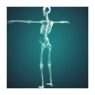 Imagen conceptual del sistema esquelético humano lona envuelta para galerias