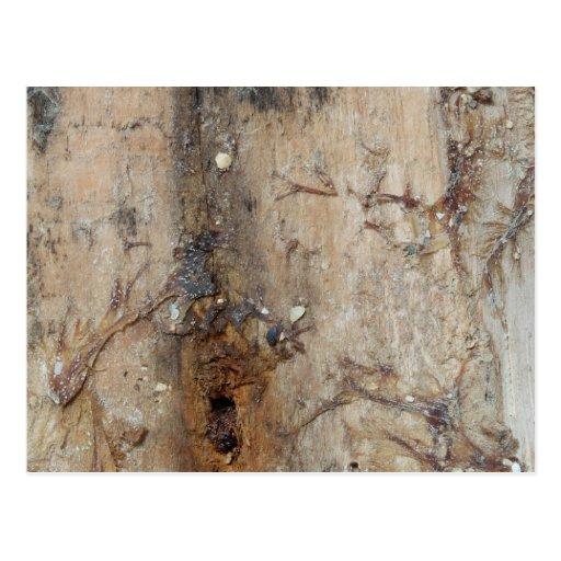 Imagen costera del Driftwood Postal