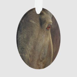Imagen de caballos - el ojo de un caballo fuerte