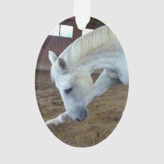 Imagen de caballos - el saludar entrenado del