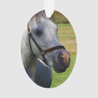 Imagen de caballos - un caballo blanco hermoso