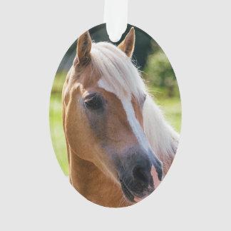 Imagen de caballos - un caballo con la melena