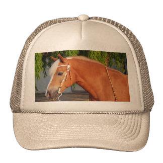 Imagen de caballos - un caballo con la melena gorra