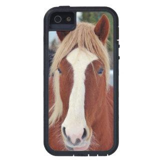 Imagen de caballos - un caballo con la melena iPhone 5 funda
