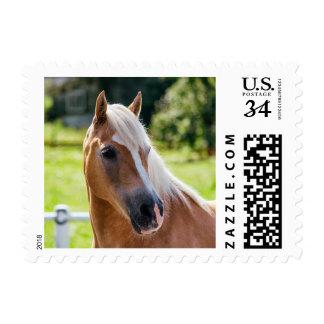 Imagen de caballos - un caballo con la melena sellos