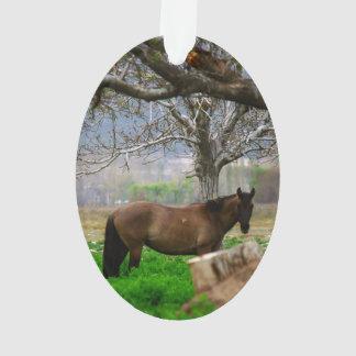 Imagen de caballos - un caballo que se coloca en