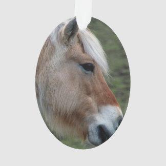 Imagen de caballos - un caballo salvaje joven