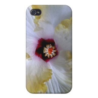imagen de centro amarilla blanca de la flor del hi iPhone 4 coberturas