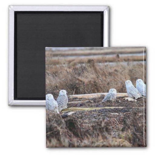 Imagen de cinco búhos Nevado Imán Cuadrado