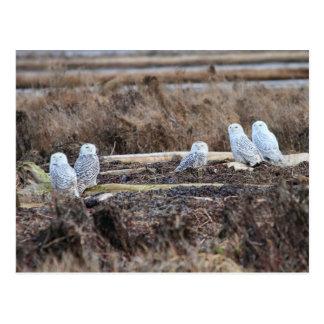 Imagen de cinco búhos Nevado Postal