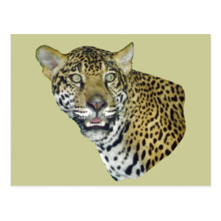 Imagen de Jaguar Postales