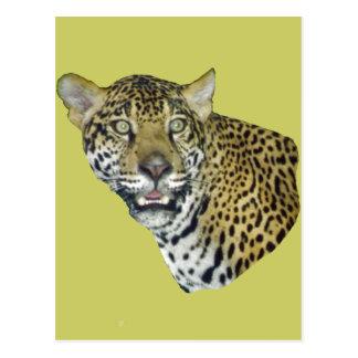 Imagen de Jaguar Tarjeta Postal