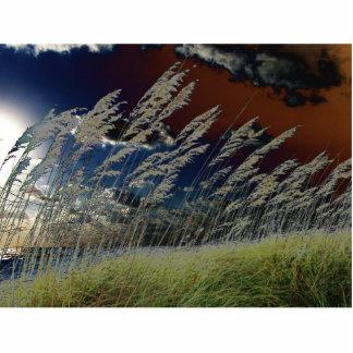 Imagen de la avena del mar de Solarized en la play Escultura Fotografica