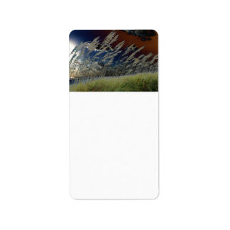 Imagen de la avena del mar de Solarized en la play Etiqueta De Dirección