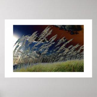 Imagen de la avena del mar de Solarized en la play Impresiones