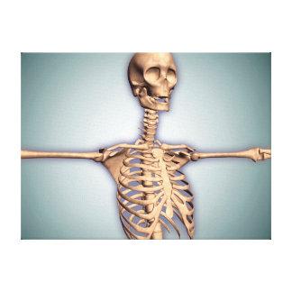 Imagen de la caja torácica humana y espinal impresión de lienzo