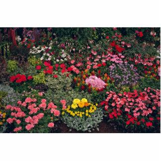 Imagen de la exposición de la flor demostración d escultura fotografica