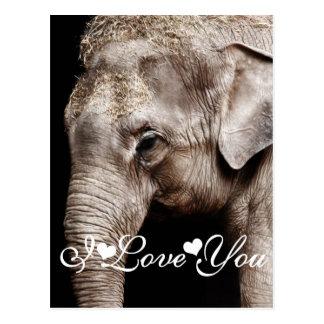 Imagen de la foto del elefante te amo tarjetas postales