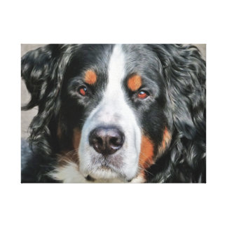 Imagen de la foto del perro de montaña de Bernese Lienzo Envuelto Para Galerías