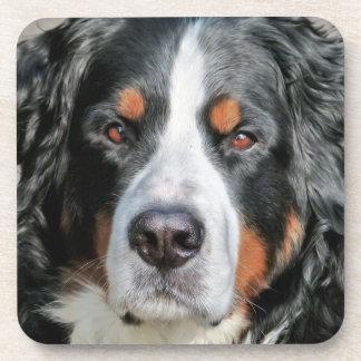 Imagen de la foto del perro de montaña de Bernese Posavasos De Bebida