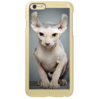 Imagen de la fotografía del gato de la esfinge del