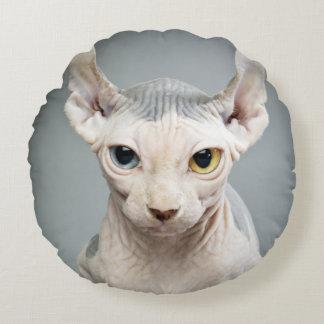 Imagen de la fotografía del gato de la esfinge del cojín redondo
