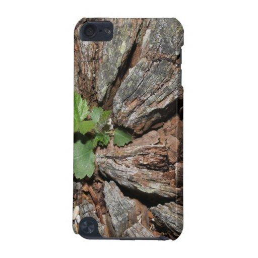 Imagen de la madera vieja con la planta