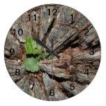 Imagen de la madera vieja con la planta relojes de pared