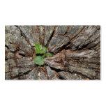 Imagen de la madera vieja con la planta tarjeta de visita