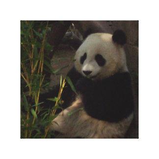 Imagen de la panda impresión de lienzo