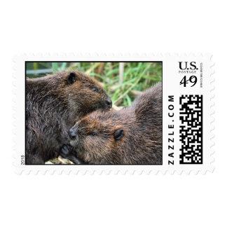 Imagen de la preparación de los castores sellos