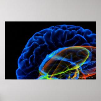 Imagen de la radiografía del cerebro póster