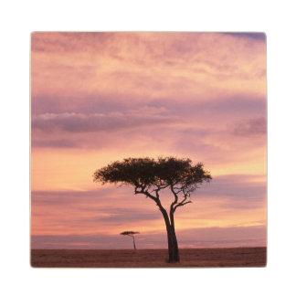 Imagen de la silueta del árbol del acacia en la posavasos de madera