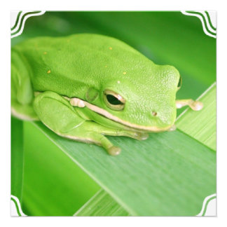 Imagen de las invitaciones de una rana arbórea comunicados personalizados
