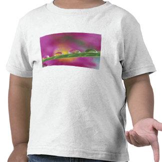 Imagen de los asteres formados en gotitas de agua camiseta