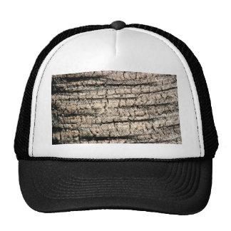 imagen de madera aseada de la textura del árbol de