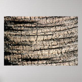 imagen de madera aseada de la textura del árbol de posters