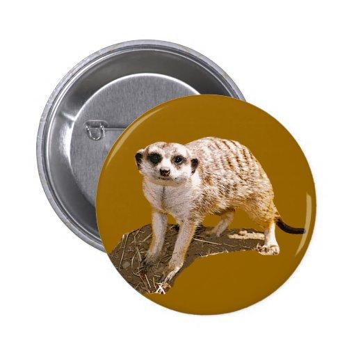 Imagen de Meerkat Pins