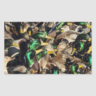 Imagen de patos en una muchedumbre pegatina