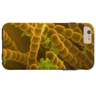 Imagen de SEM del polen y de los estambres del Funda Resistente iPhone 6 Plus
