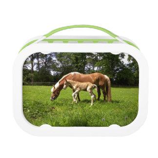 Imagen de un caballo con su potro joven