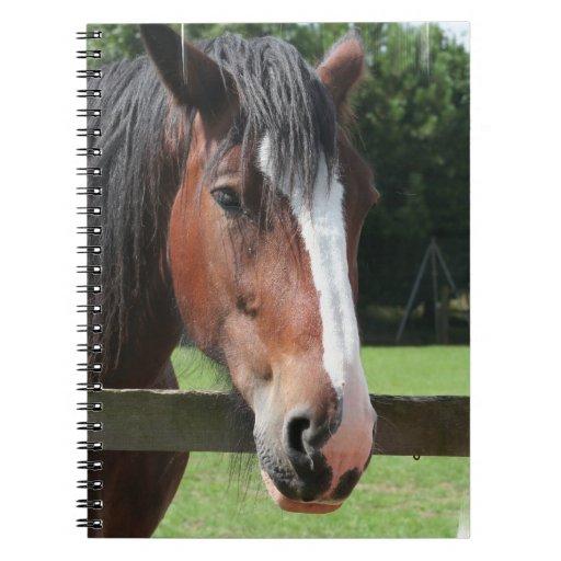 Imagen de un cuaderno cuarto del caballo