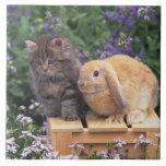 Imagen de un gatito y de una situación del conejo  tejas  ceramicas