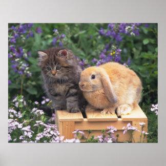 Imagen de un gatito y de una situación del conejo  posters
