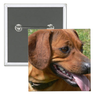 Imagen de un Pin del cuadrado del perro del Dachsh