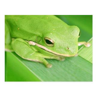 Imagen de una postal de la rana arbórea