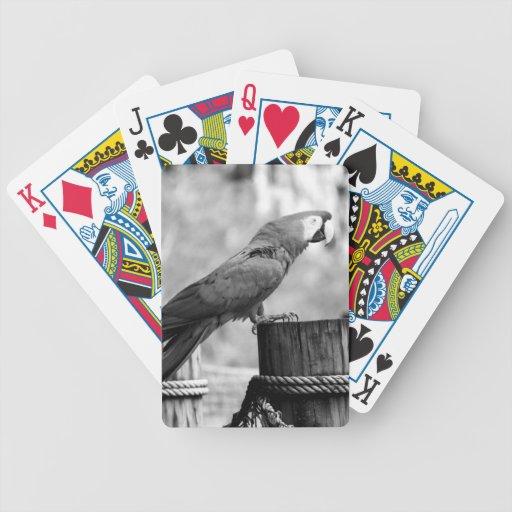 imagen del animal del bw del pájaro del macaw cartas de juego
